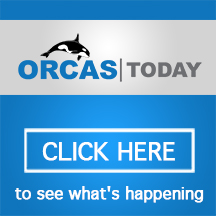 orcas today opt2 ver-216x216
